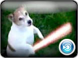My Dog is a Jedi